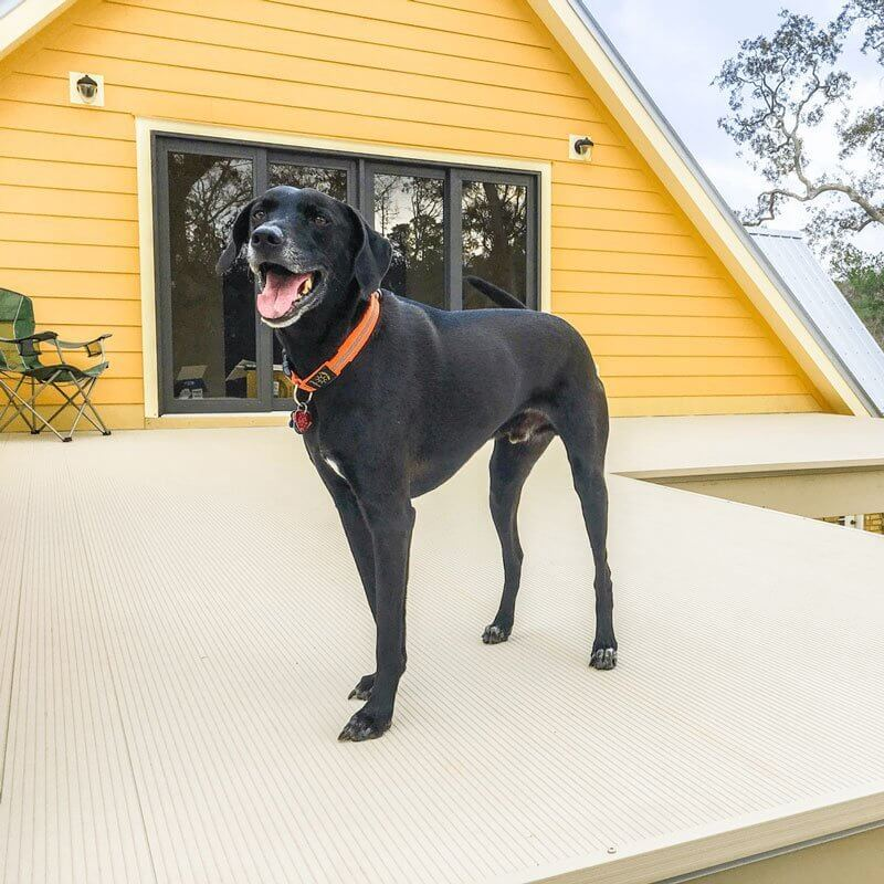 Dog Standing On AridDek Waterproof Deck System